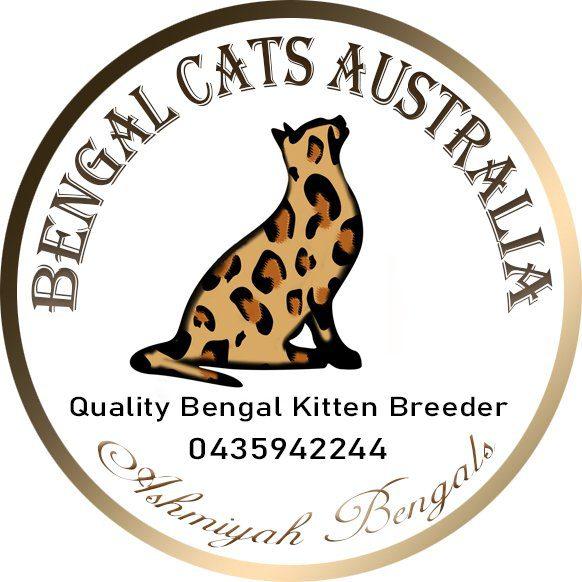 Ashmiyah Bengal Cats Australia